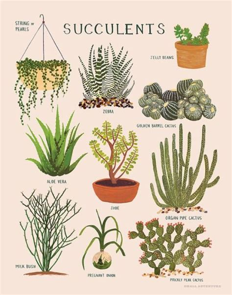 littlealienproducts succulents print 28 illustration pinterest different types of