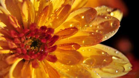 desktop gratis fiori 1920x1080 fiori sfondi 1920x1080 tutto wallpaper foto