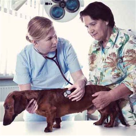 idiopathic epilepsy in dogs what is idiopathic epilepsy in dogs petcarerx