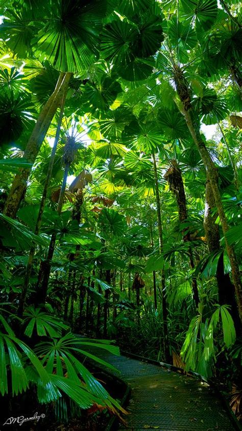 rainforest sections 25 best ideas about rainforest pictures on pinterest