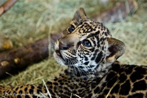 kearny mesa jaguar jaguar san diego new used jaguar dealership san autos post