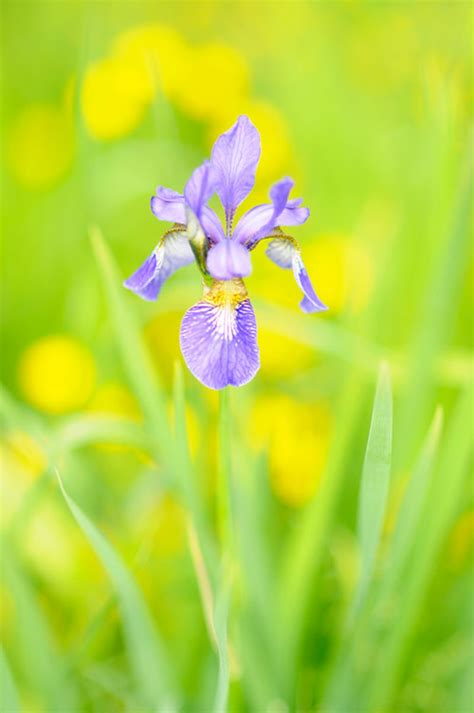 the flowers wild dream houses from movies 6 purple iris flowers in the garden s like the wild
