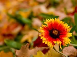 autumn field flowers google search autumn pinterest