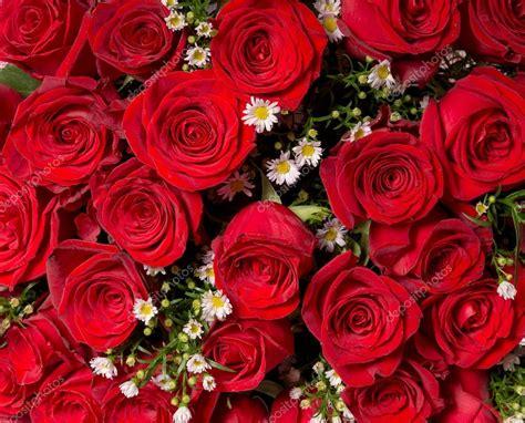 imágenes de rosas rojas naturales fondo de rosas rojas naturales foto de stock
