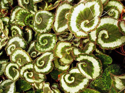 stunning photographs  sacred geometry  nature