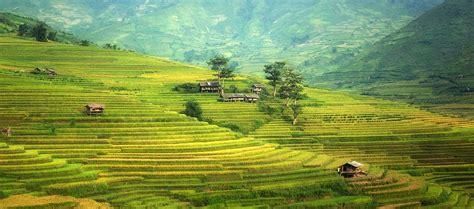 free photos free photo agriculture asia cat china free image on
