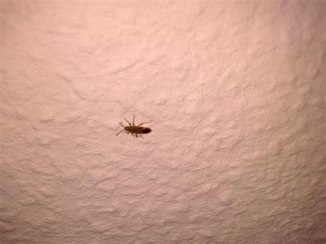 wie lange überleben giardien in der wohnung braunes ungeziefer in der wohnung insekten zimmer