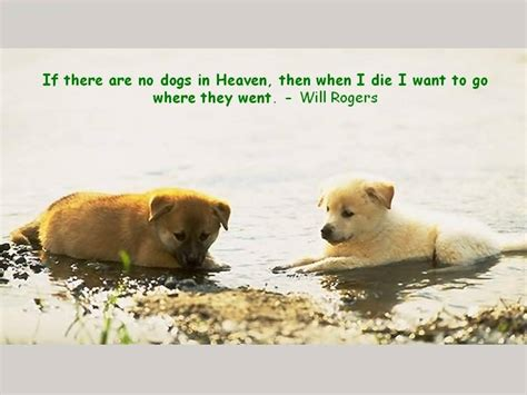 dogs in heaven if there are no dogs in heaven quotesvalley