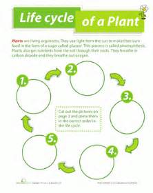 How Does Answer Garden Work Cycle Of A Plant Worksheet Education