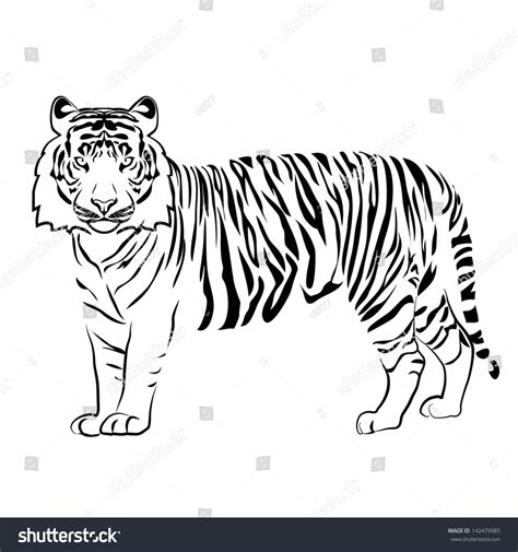 Tiger Outline Images by Tiger Outline Vector Stock Vector 142479985