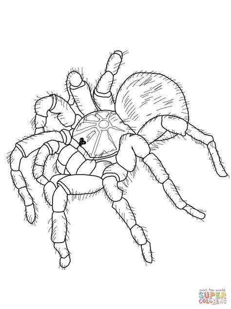 goliath tarantula coloring page free printable coloring