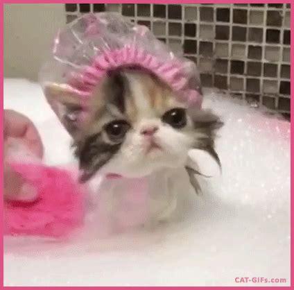 Pink Cat Snoppy kitten gif aww kitten wearing a pink shower cap while taking a bath cat gifs
