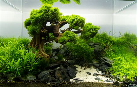 Driftwood Aquascape by Bonsai Driftwood Aquascape Bonsai Driftwood