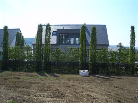 Moderner Sichtschutz Im Garten 2296 by Spalierb 228 Ume Die Schwebende Hecke Moderner Sichtschutz