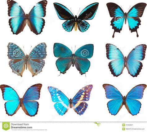 imagenes de mariposas moradas y azules mariposas azules imagen de archivo imagen 31055621