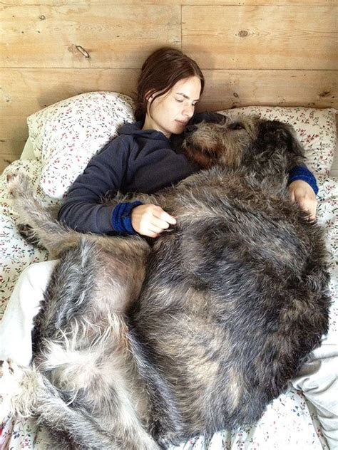 pictures of big dogs 20 photos of big but dogs for animal reckon talk