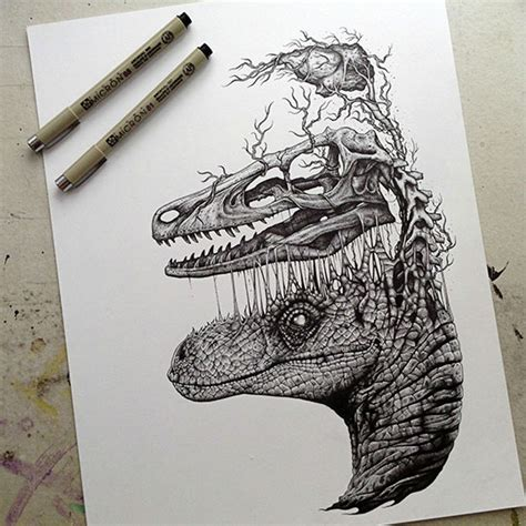 raptor skull and brain drawing