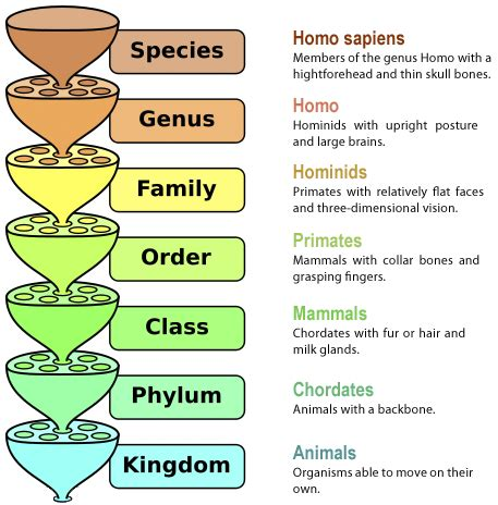 taxonomy nomenclature taxonomy classification for modern