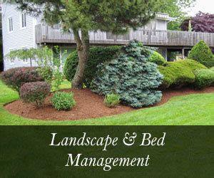 landscape maintenance kw landscaping