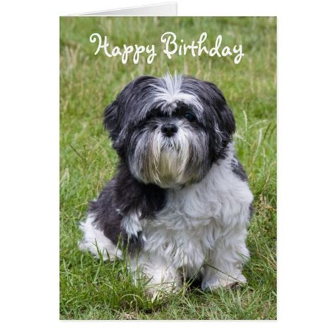 happy shih tzu shih tzu happy birthday greeting card zazzle