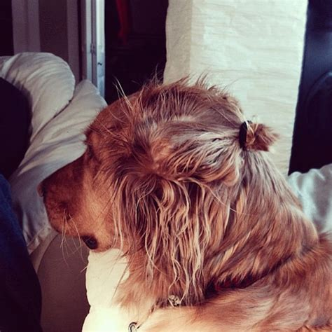 dog with man bun forget man buns because dog buns are everything right now