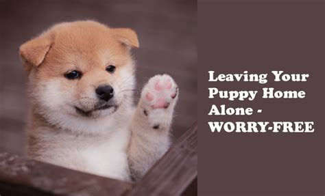 puppy at home leave your puppy alone with no fear my shiba inu