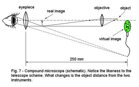 How Do Light Microscopes Work by Microscope How It Works 171 Optics Binoculars