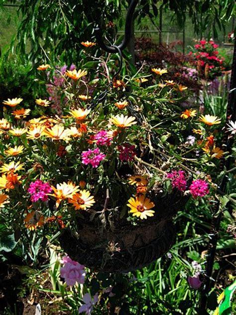 sun container garden ideas sun containers on container garden sun
