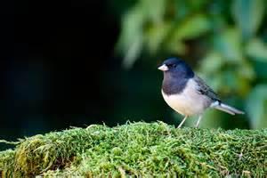 Backyard Birder Chris The Photog Backyard Birds