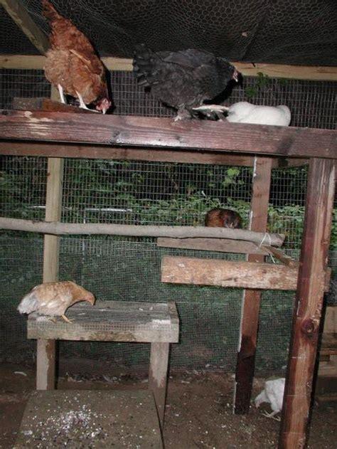 build  jungle gym   backyard chickens diy