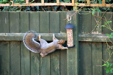 squirrel repellent recipe effective wildlife solutions