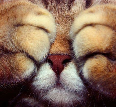 Peek A Boo by Peek A Boo