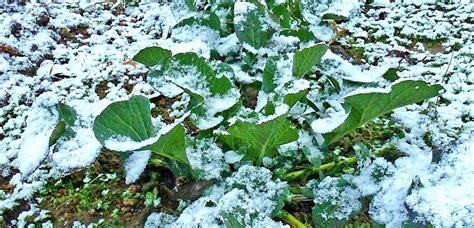 winter gardening winter gardening ideas tips