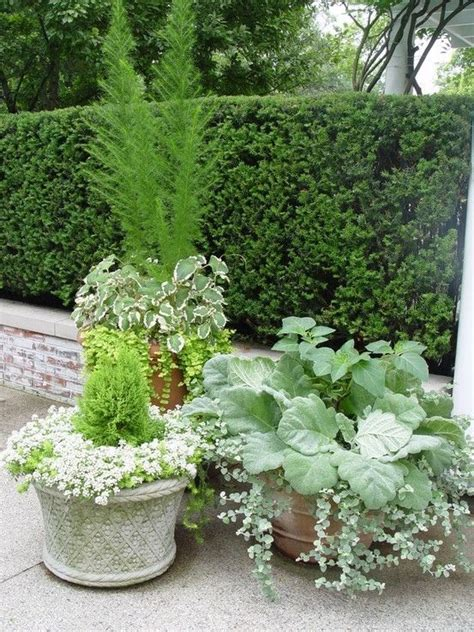 potted plants all white and green gardens the