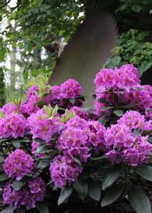 flowering shrubs for shade gardens hgtv