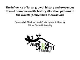 life history pattern and resource allocation ppt salamanders ambystoma maculatum powerpoint