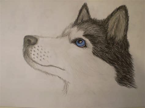 how to draw a husky puppy siberian husky by mustavuona on deviantart
