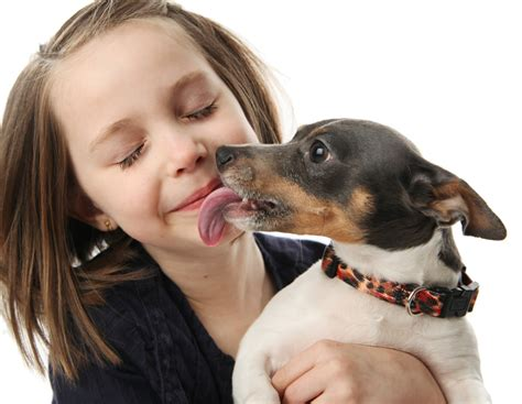 can dogs get sick from humans are kisses safe can my really make me sick k 10 174