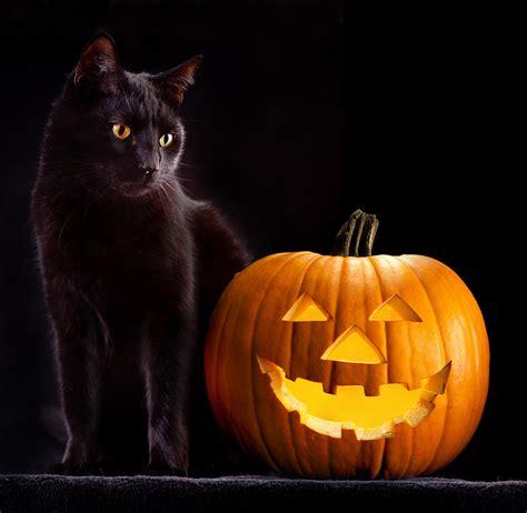cat and pumpkin pumpkin and cat photograph by dirk ercken