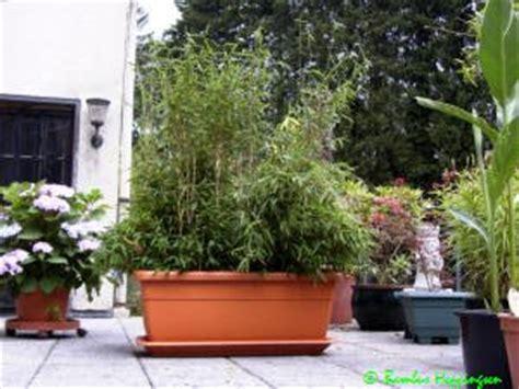 Bambus Im Balkonkasten by Balkonbepflanzung Sichtschutz