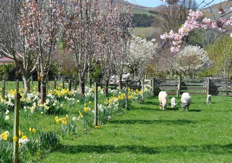 country spring flower garden  perfect spring scene