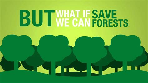 don t save anything uncollected essays articles and profiles books save paper to save forests