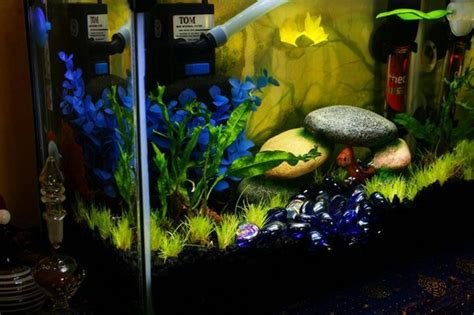 aquascape betta 2 5 gallon aquascape for a betta named guppy by atena