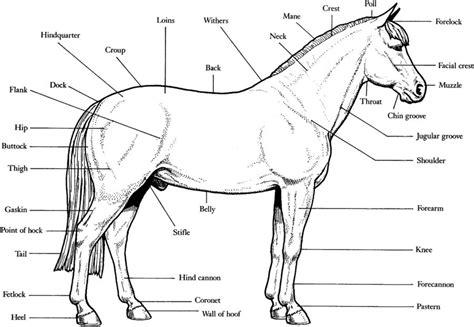 horses muscles diagram free and printable diagrams diagram site