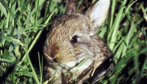 Baby Bunnies In Backyard Why Do Bunnies Dig Holes Animals Mom Me