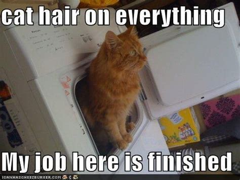 Cat Hair On by Cat Hair On Everything Cat Meme Cat Planet Cat Planet