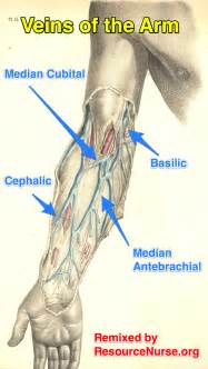 Photos of the quot human body veins diagram quot