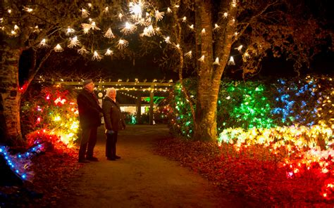 christmas magic lights up viu s milner gardens woodland