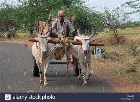 indian cart indian bullock cart stock photo royalty free image