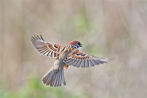 http ordinarysparrow files wordpress com 2012 11 sparrow